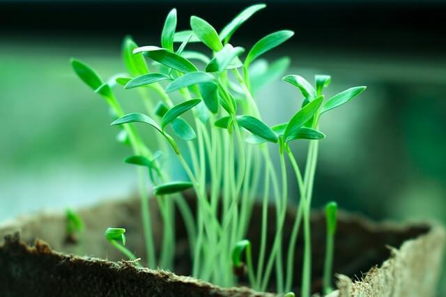 pertumbuhan dan perkembangan tumbuhan