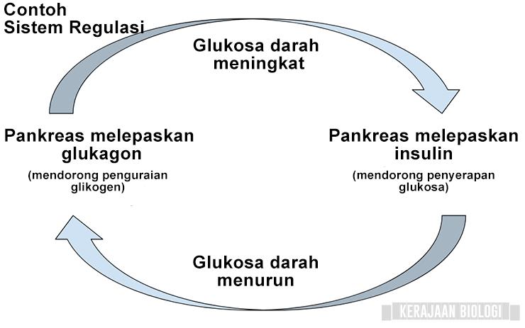 Contoh Sistem regulasi - sistem endokrin
