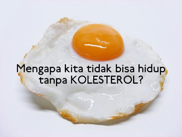 apakah kolesterol itu, apa fungsi kolesterol