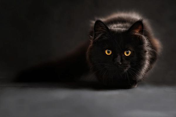 Mata Kucing Menyala Karena 3 Hal